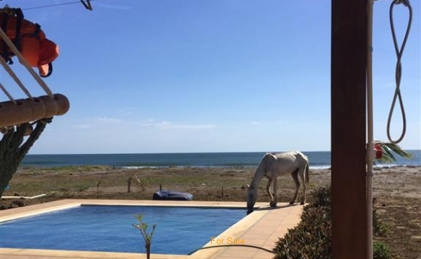 Pool at Tes #36 and wild horse drinking